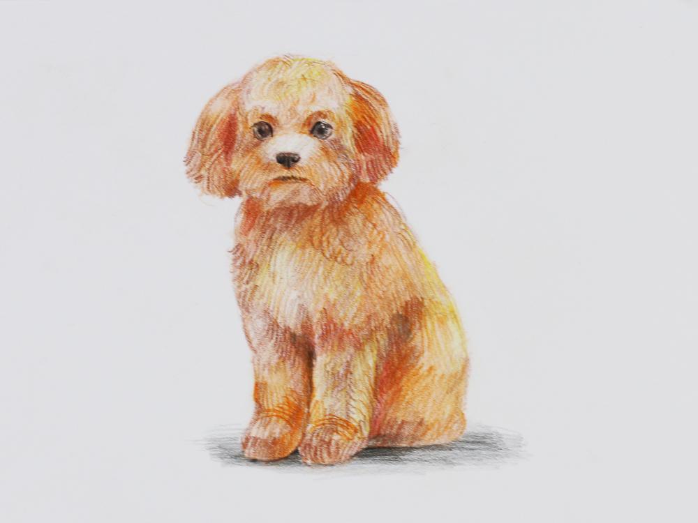 イヌの描き方色鉛筆 色鉛筆 Artlessons アートレッスン