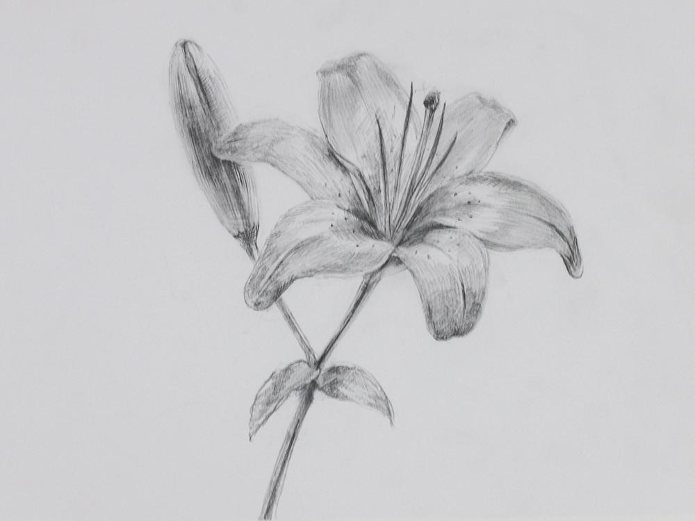 ユリの描き方 鉛筆 Artlessons アートレッスン